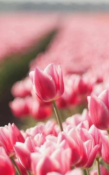 Tulip Live Wallpaper screenshot 7