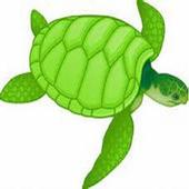 Turtle Memory Game icon