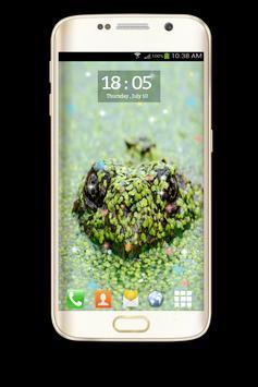 Live Wallpapers - Turtle apk screenshot