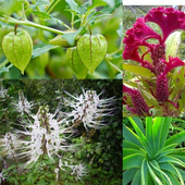 Medicinal Plants And Benefits icon
