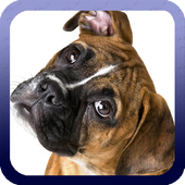 Boxer Dog Wallpaper icon