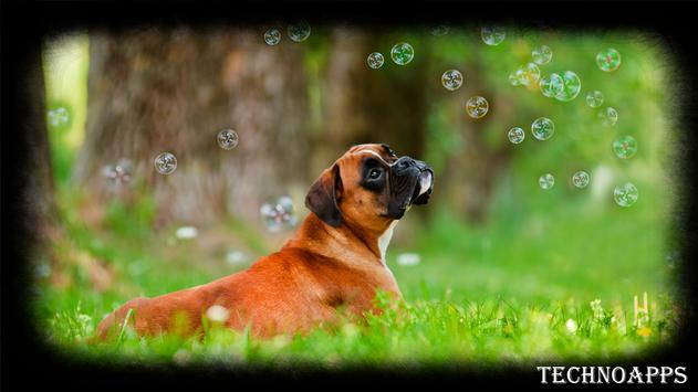 Boxer Dog Wallpaper poster