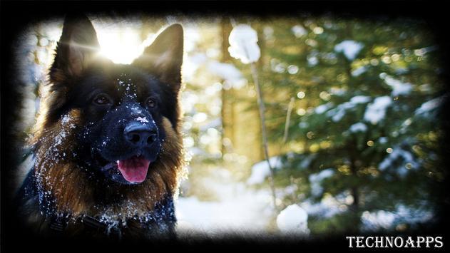 German Shepherd Wallpaper apk screenshot