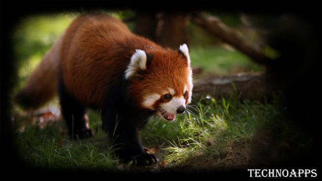 Red Panda Wallpaper apk screenshot
