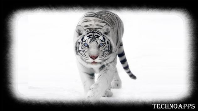 White Tiger Pack 2 Wallpaper apk screenshot