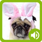 Dog Communicator icon