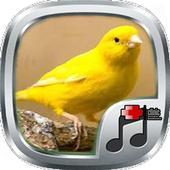 Telolet Kicau Canary icon