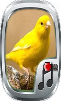 Telolet Kicau Canary poster