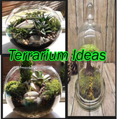 Terrarium idea icon