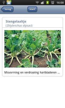 Ziekten in suikerbieten apk screenshot