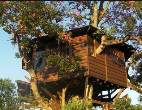 Tree House Designs poster