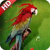 Parrot Wallpaper icon