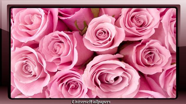 Pink Rose Wallpaper apk screenshot