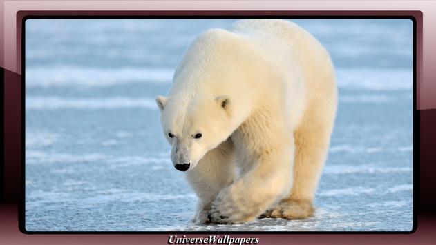 Polar Bear Wallpaper apk screenshot