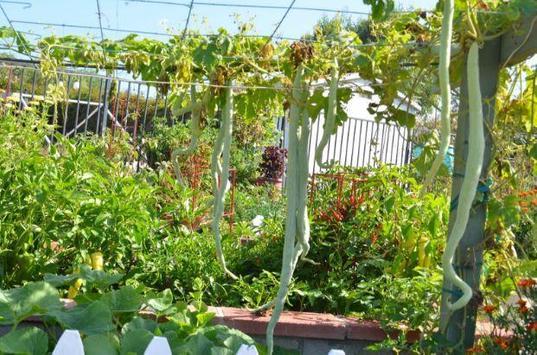 Vegetable Gardern Ideas poster