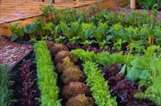 Vegetable Gardern Ideas screenshot 2