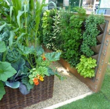 Vegetable Gardern Ideas screenshot 4