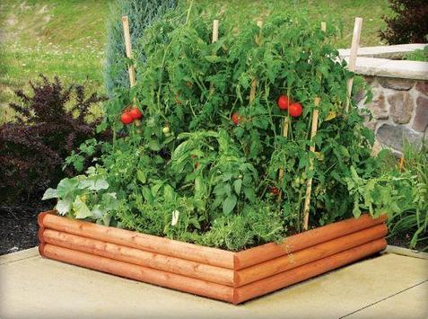 Vegetable Gardern Ideas screenshot 5