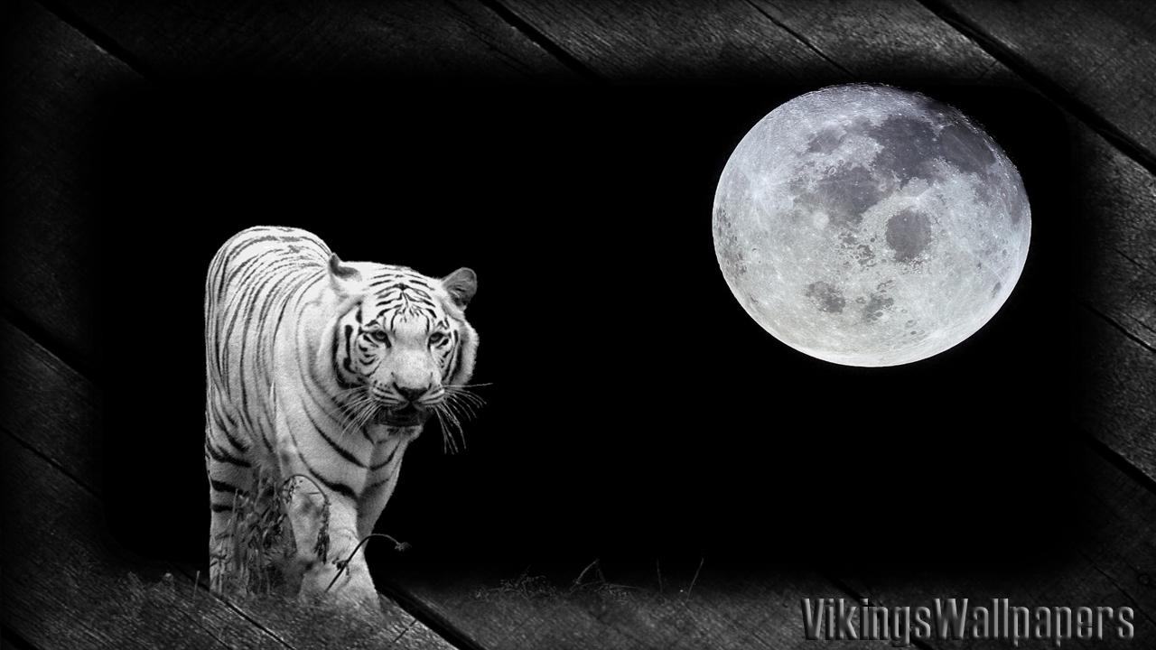 White Tiger Wallpaper For Android Apk Download