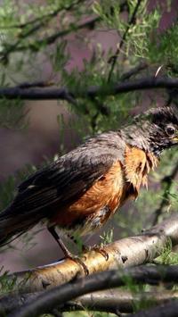 Birds. Nature HD wallpapers screenshot 4