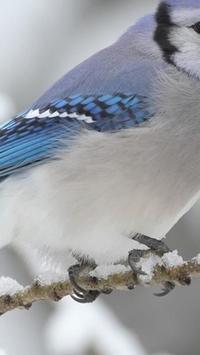 Birds. Nature HD wallpapers screenshot 5