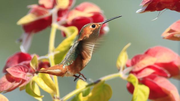 Birds. Nature HD wallpapers screenshot 7