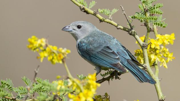 Birds. Nature HD wallpapers screenshot 8