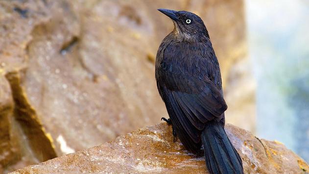 Birds. Nature HD wallpapers screenshot 9