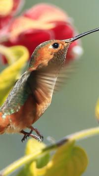 Birds. Nature HD wallpapers poster