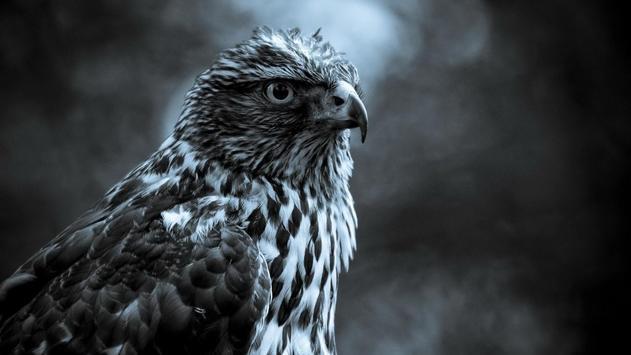 Birds. Nature HD wallpapers screenshot 10