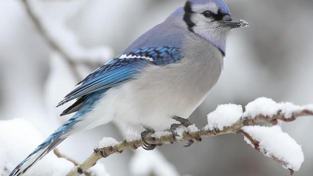 Birds. Nature HD wallpapers screenshot 12