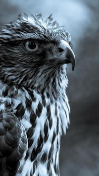 Birds. Nature HD wallpapers screenshot 3