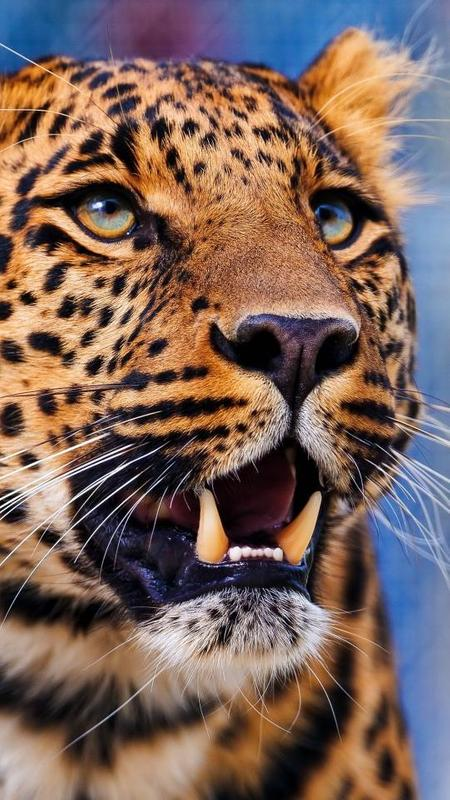 animal wallpapers hd for android: Animal Wallpapers Para Android