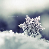 Winter Wallpapers HD icon