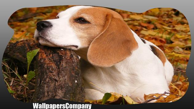 Beagle Dog Wallpaper poster