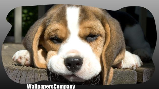 Beagle Dog Wallpaper apk screenshot