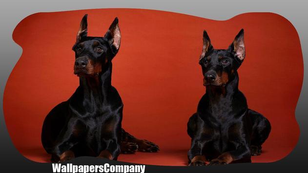 Doberman Dog Wallpaper apk screenshot