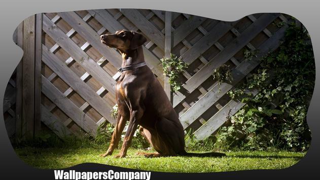 Doberman Dog Wallpaper poster