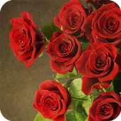 Roses Red Wallpaper icon