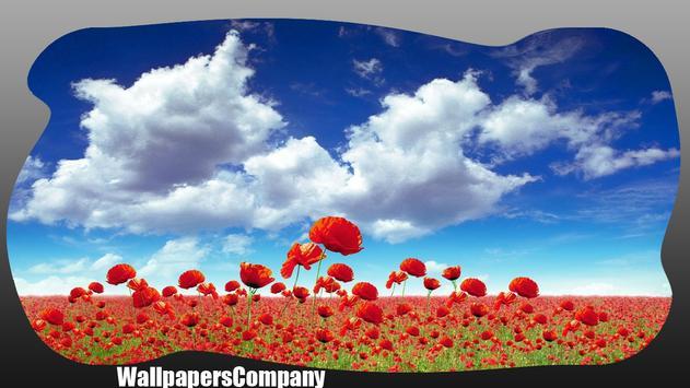 Roses Red Wallpaper apk screenshot