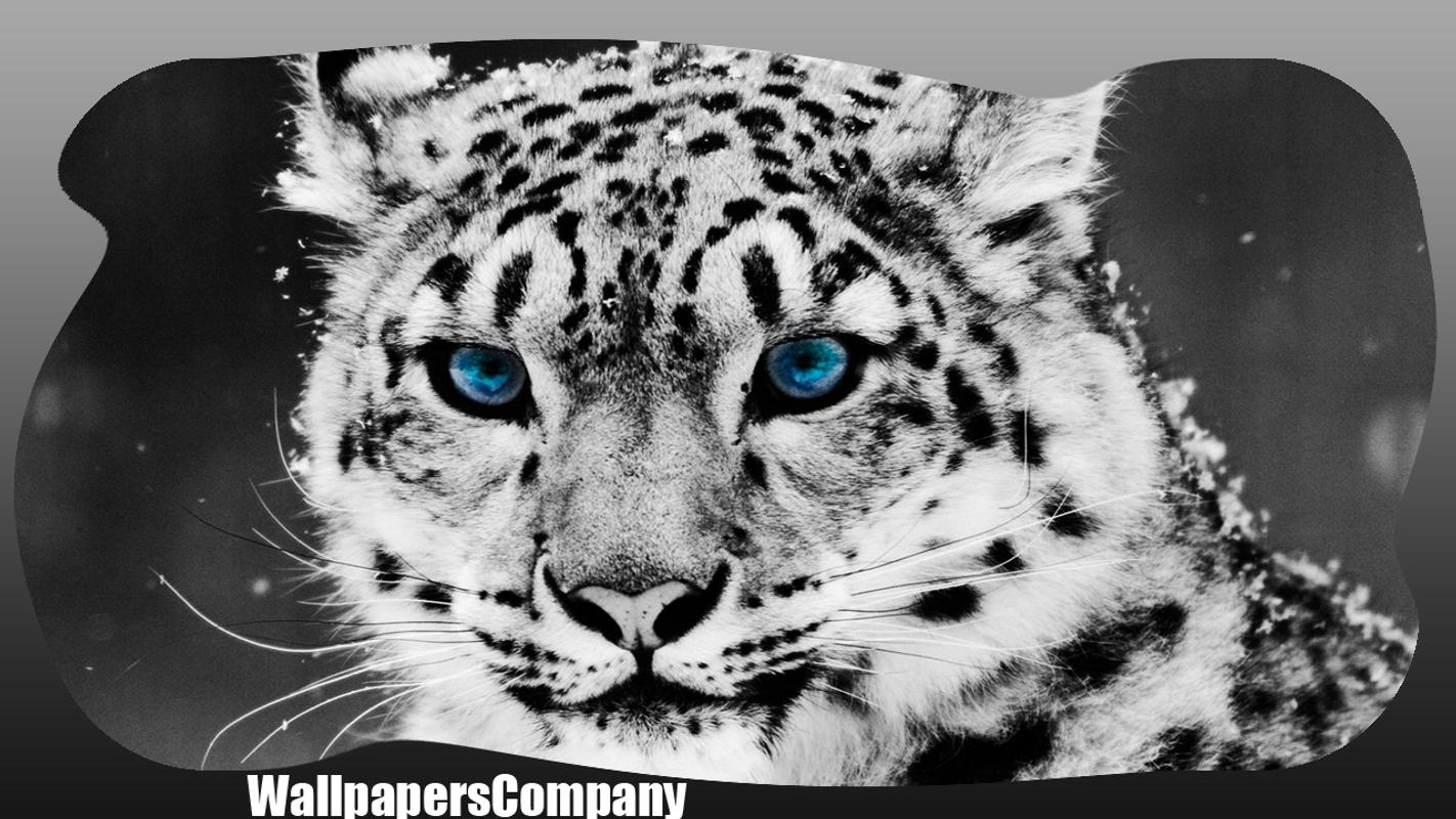 white tiger wallpaper apk download - free personalization app for