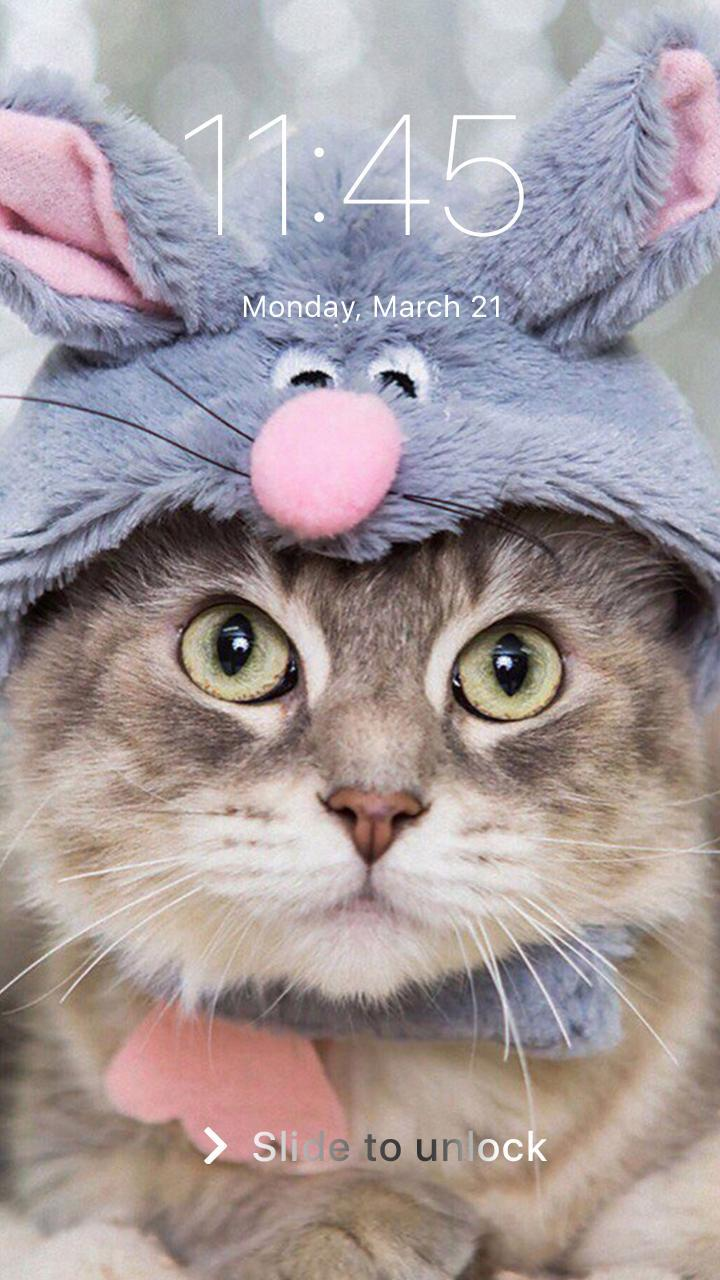 Cute Funny Cat Dog Pin Lock Screen Hd Wallpaper For Android Apk Download