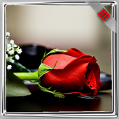 Red Roses Wallpaper icon