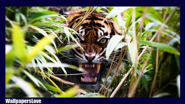 Big Cats Wallpaper screenshot 1