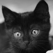 Black Cats HD Live Wallpaper icon