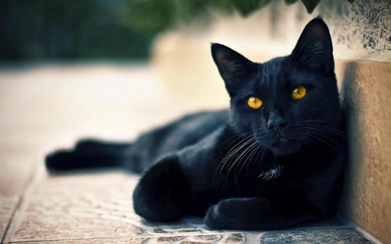 Black Cats HD Live Wallpaper screenshot 1