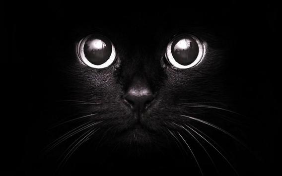 Black Cats HD Live Wallpaper screenshot 2