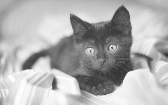 Black Cats HD Live Wallpaper screenshot 3