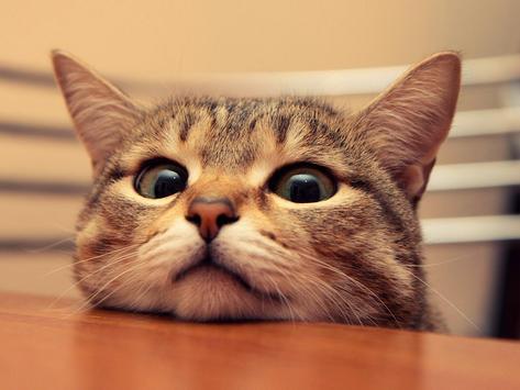 Cute Cat Live Wallpaper screenshot 2