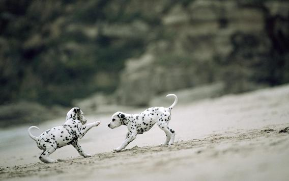 Dalmatian Pack 2 LWP apk screenshot